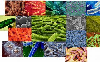 Особенности и правила примения разных видов бактерий для септиков и выгребных ям